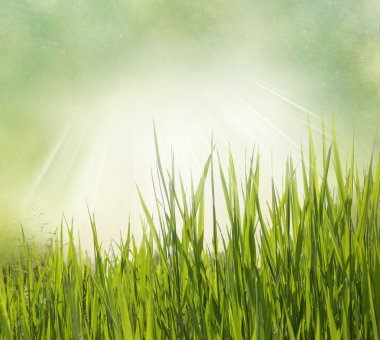 Nature background with grass. Vintage style