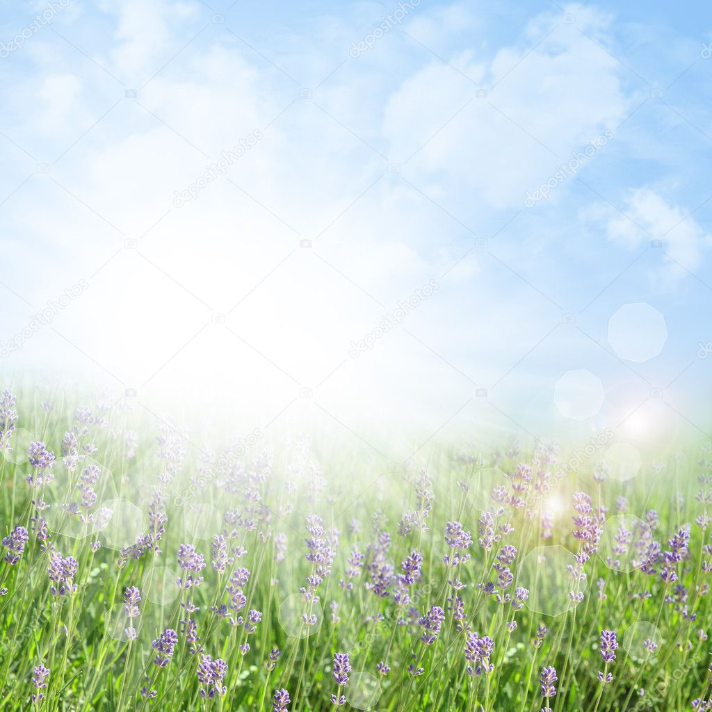 Abstract spring and summer background with lavender