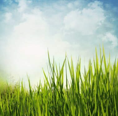 Vintage textured nature background with grass