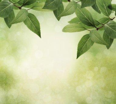 Green leaves border on grunge textured background