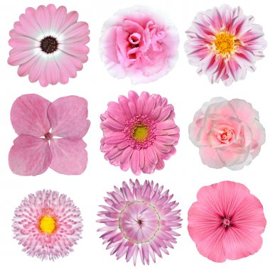 Collection of Pink White Flowers Isolated on White
