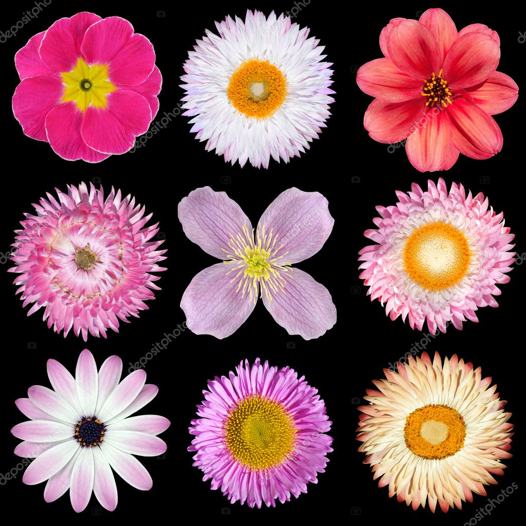 Various Pink Red White Flowers Isolated On Black Stock Photo