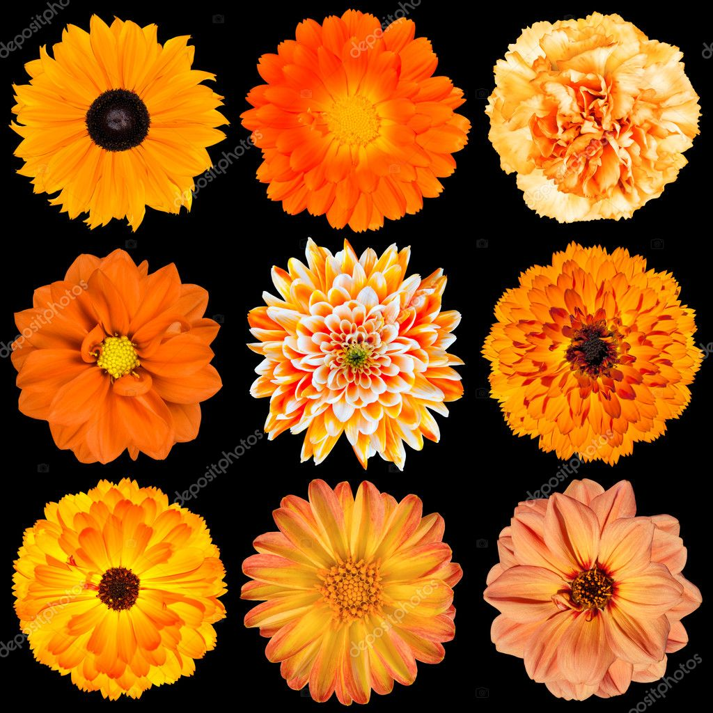 Selection of Various Orange Flowers Isolated on Black