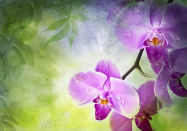 Orchid flowers and green leaves on a vintage paper