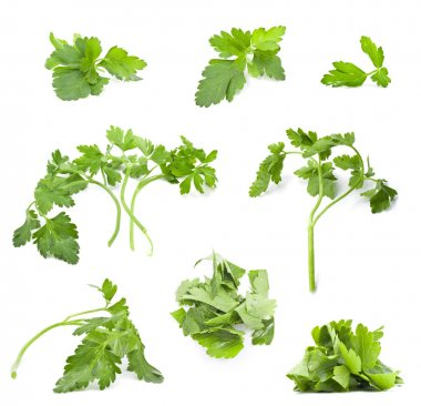 Collection of parsley leaves