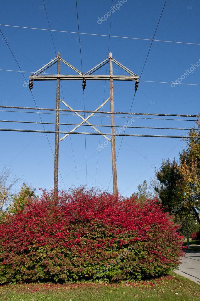 Electrical poles behind beautiful bush