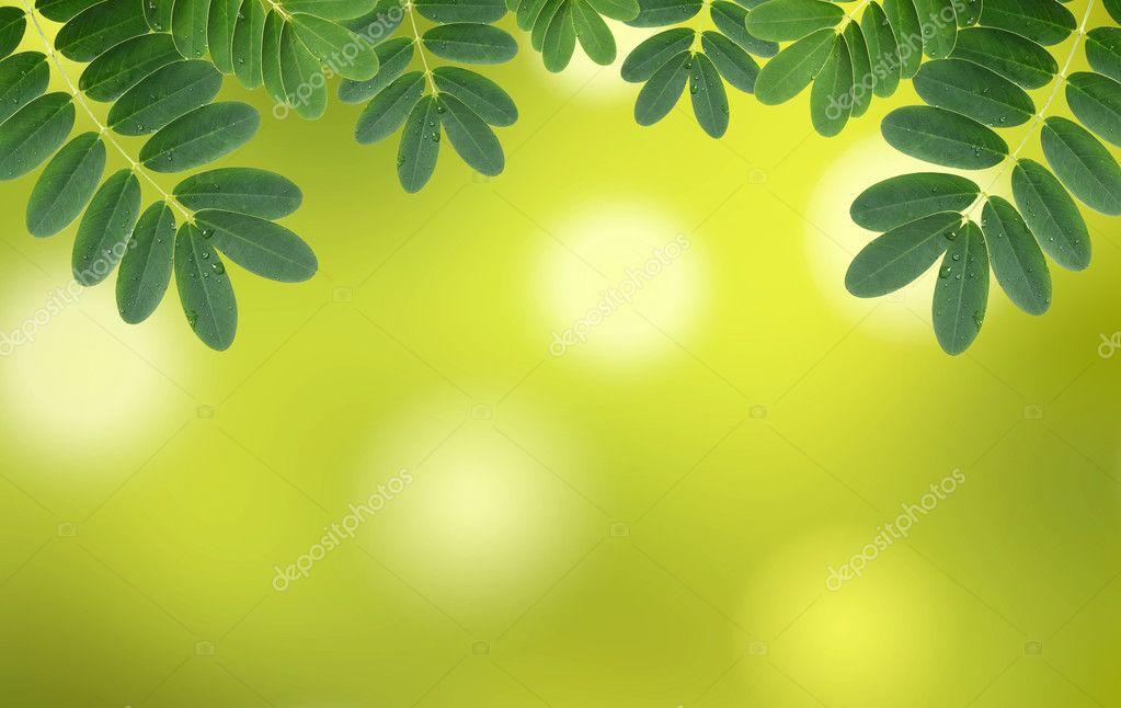 Hojas De Color Verde Agua Gotas Con Fondo Natural