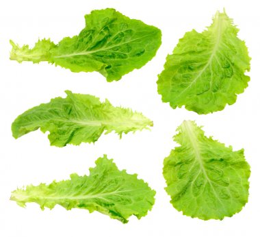 Set green salad leaf isolated