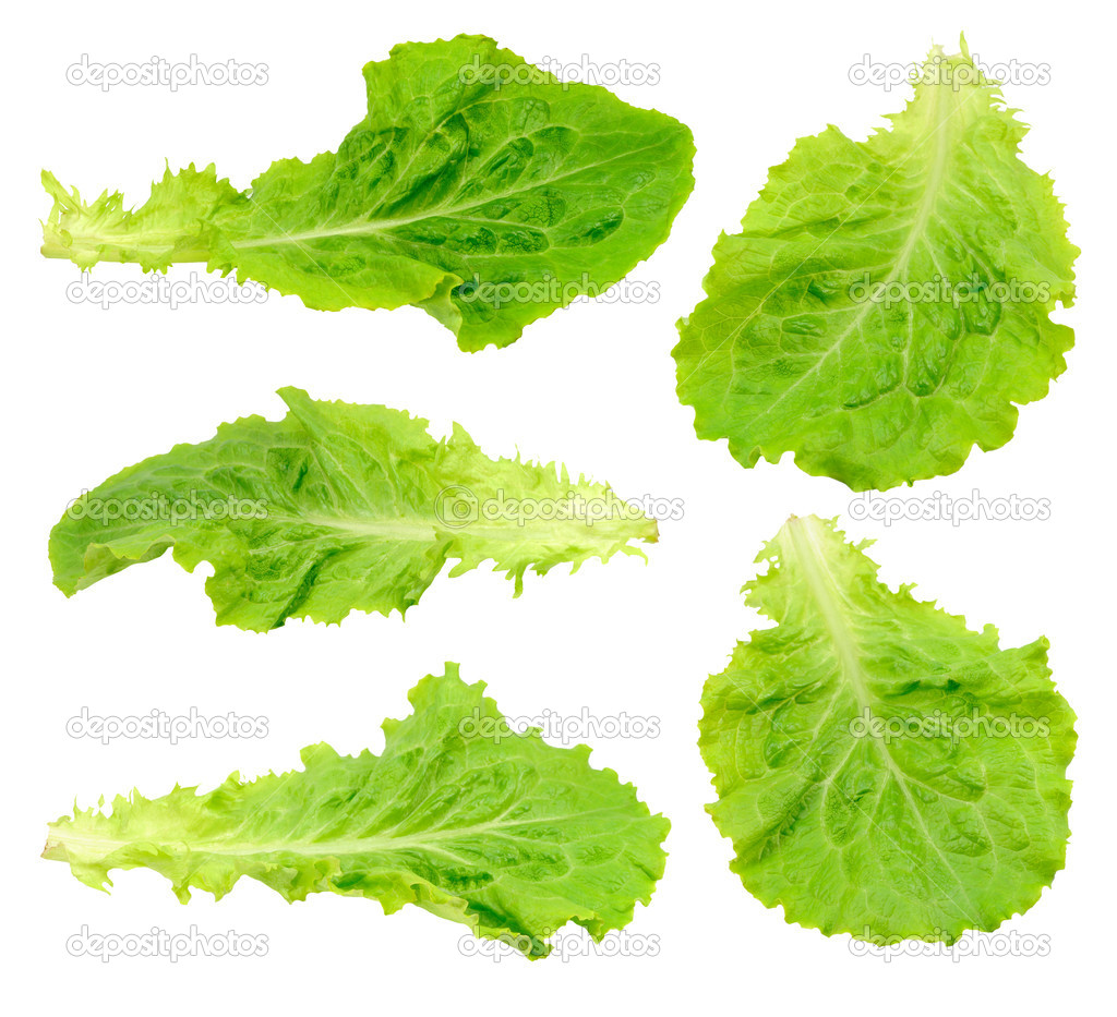 Set green salad leaf isolated