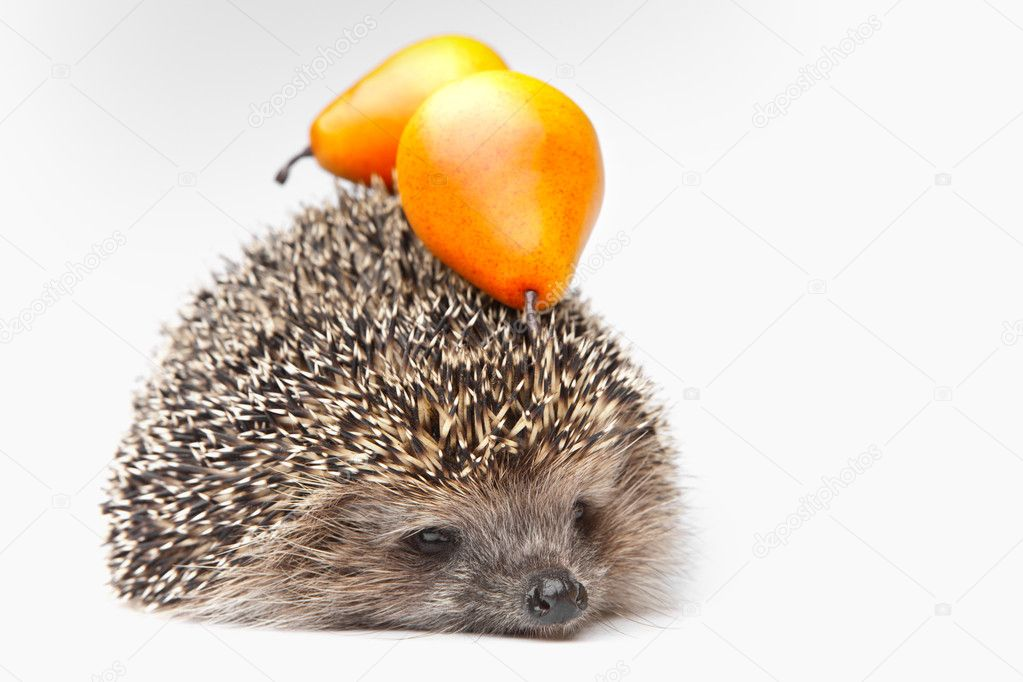 Hedgehog with fruits