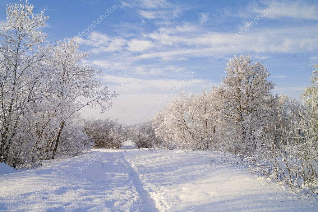 Snow footpath, trees in snow and the blue sky with clouds.