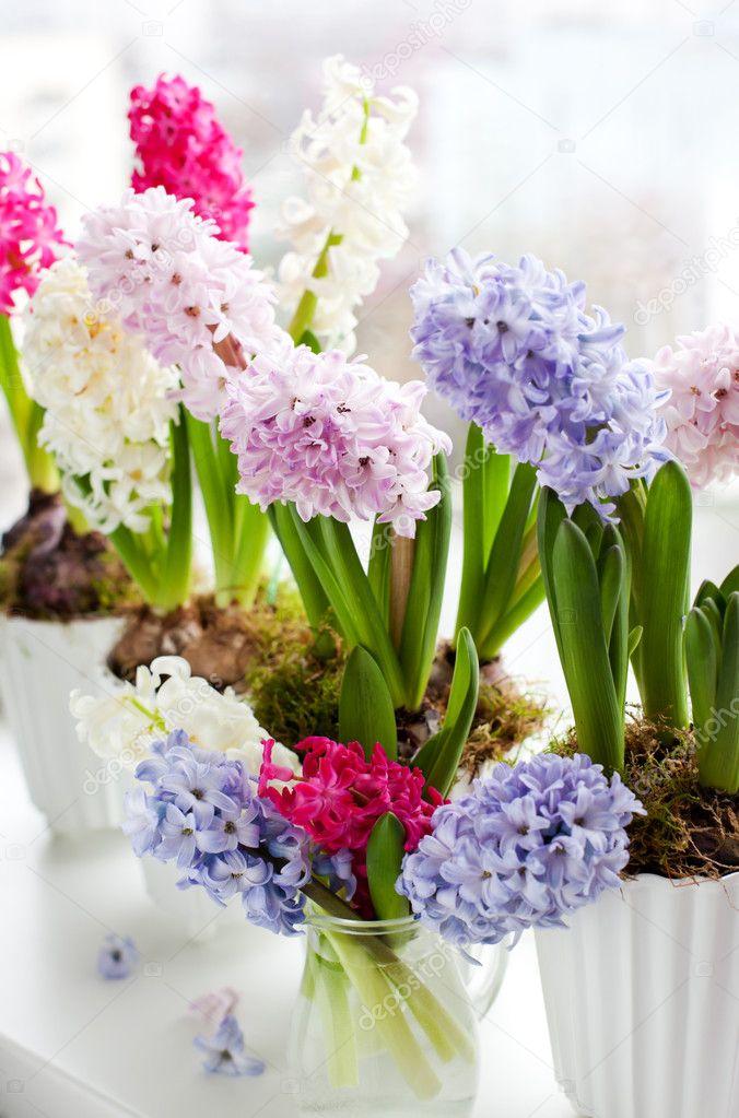 Hyacinths on a window sill