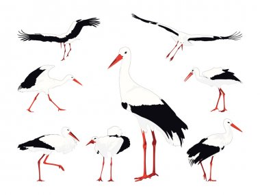 Stork collection