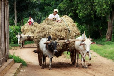 Farmers with their cart in Myanmar