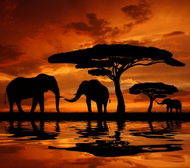 Silhouette two elephants