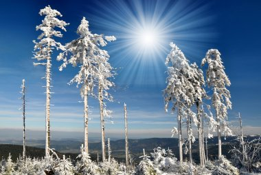 Winter in the national park Sumava - Czech Republic stock vector
