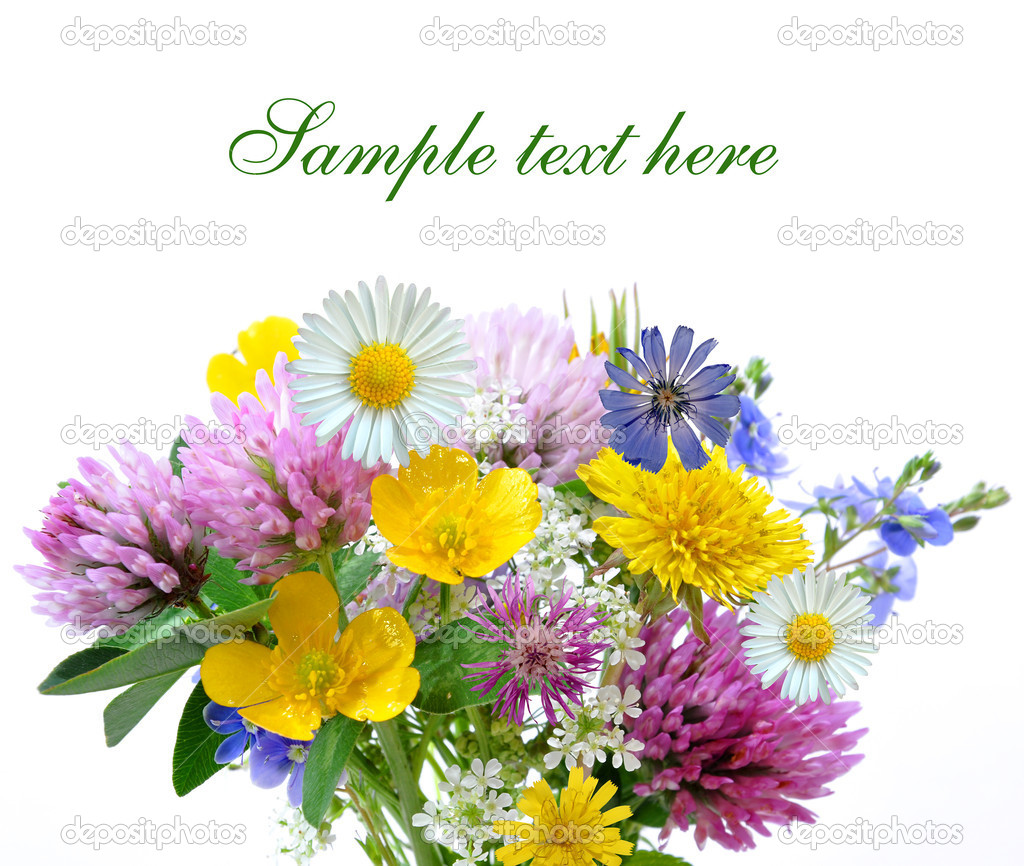 Meadow flowers isolated