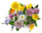 szag vadvirágok elszigetelt