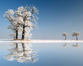 zmrazené strom