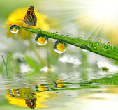 Fotografie Rosa a motýl