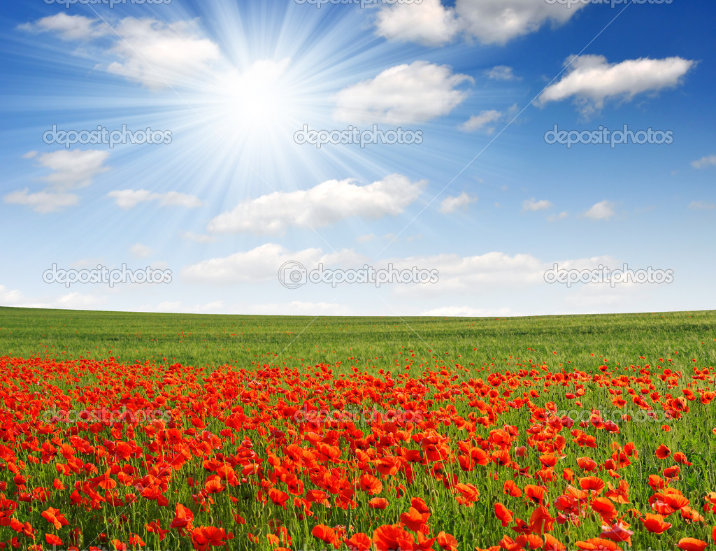 Фотообои Red poppy field