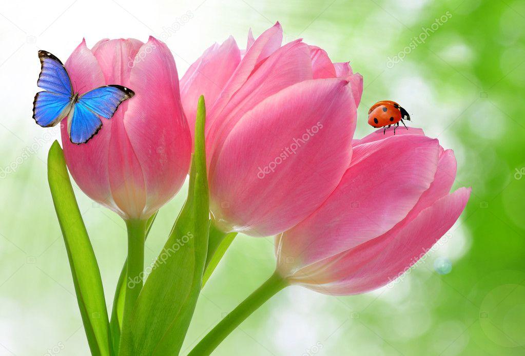 Tulipano con farfalla e coccinella foto stock vencav - Coccinella foto gratis ...