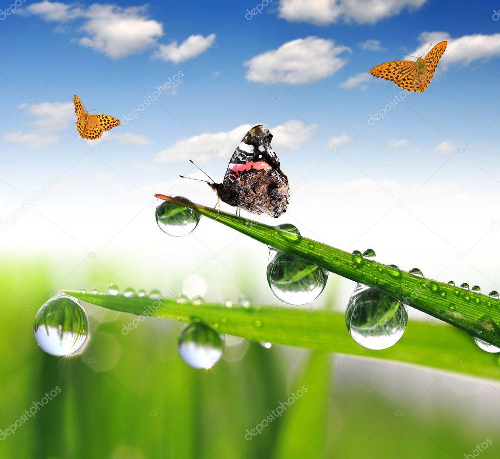 Dew and butterflies