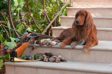 Bird dog and trophies