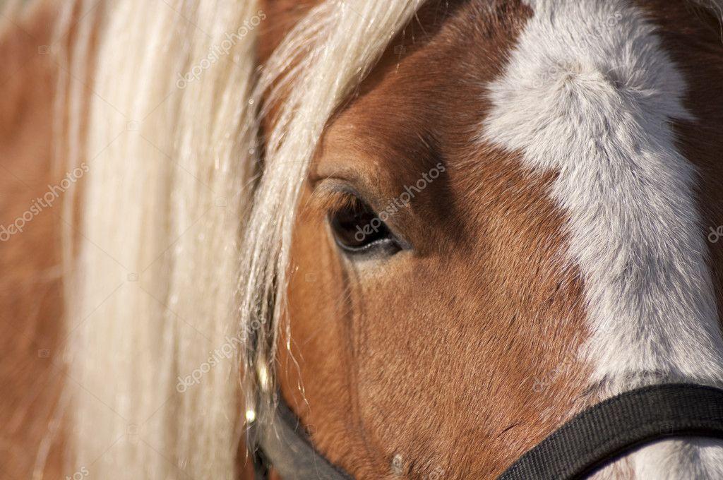 Horse portrait closeup