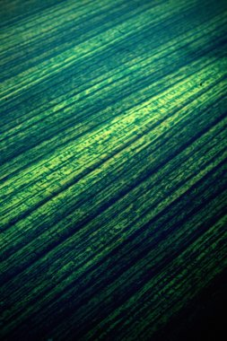 Abstract green board background composition