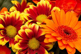 Different gerbera