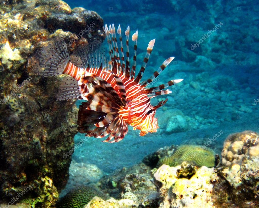 Fish of the Red Sea2