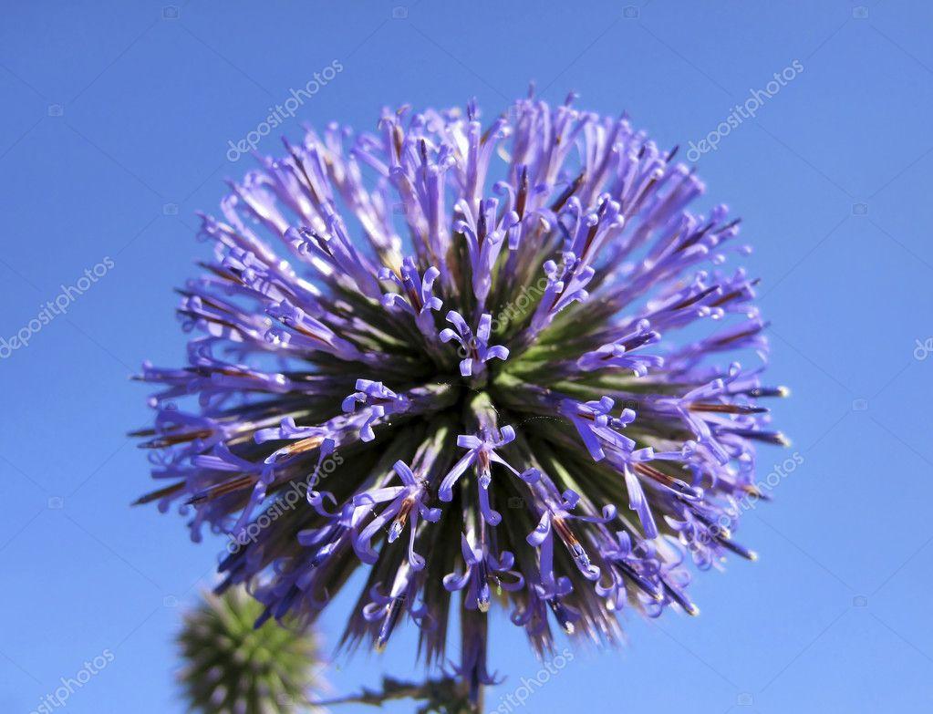Flower Like Ball Stock Photo Irisphoto11 8343001