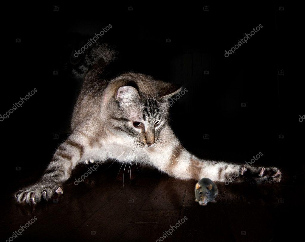 Imágenes Gatos Cazando Ratones Para Colorear Gato Caza Ratón