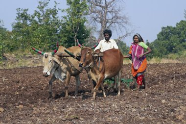 Life in Rural India