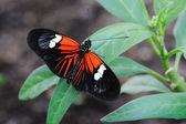 Pošťák motýl