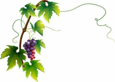 Elegant vine