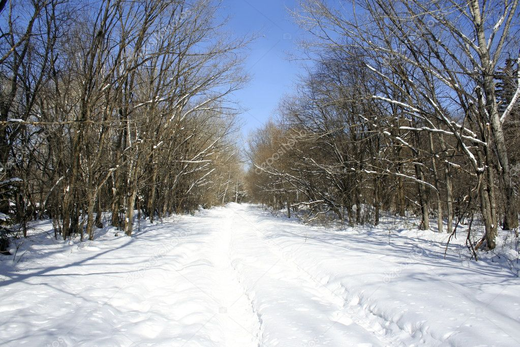 Beautiful morning in winter forest