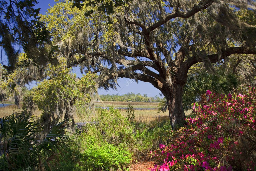 South Carolina in Bloom