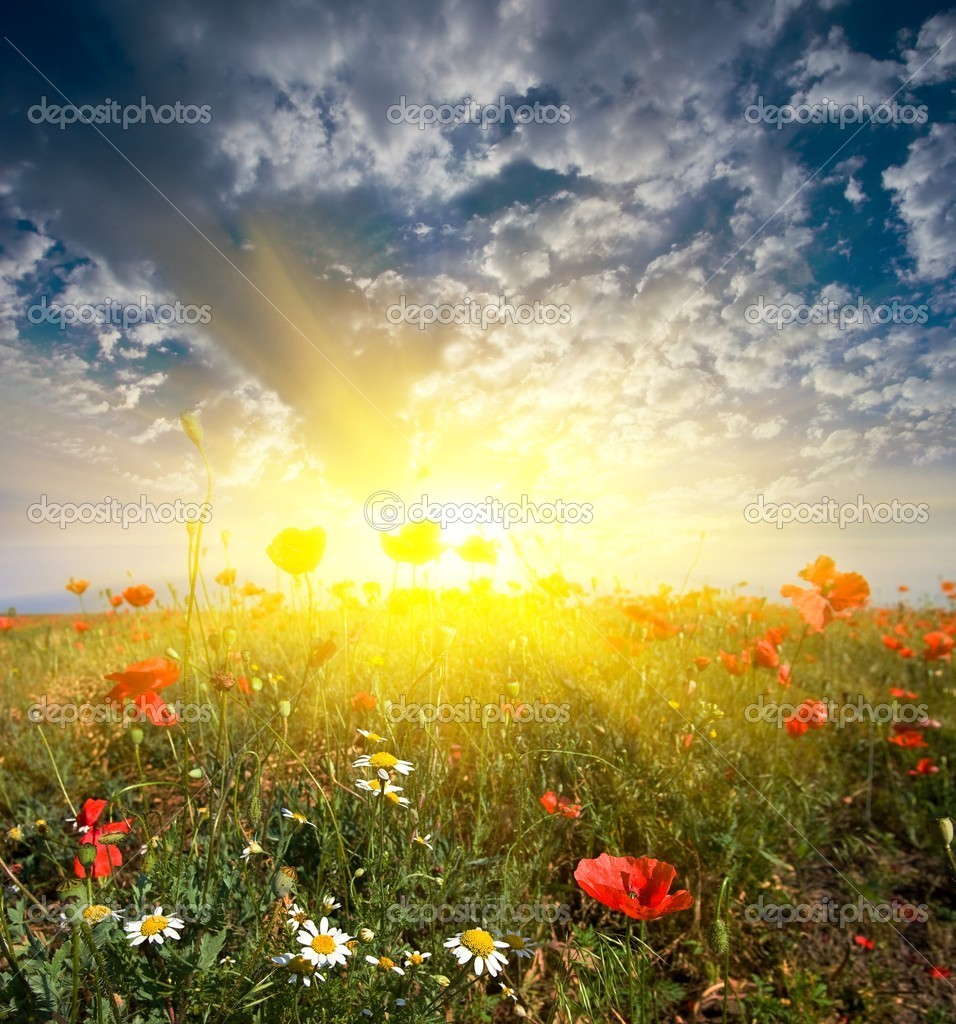 Field with flowers in a rays of rising sun