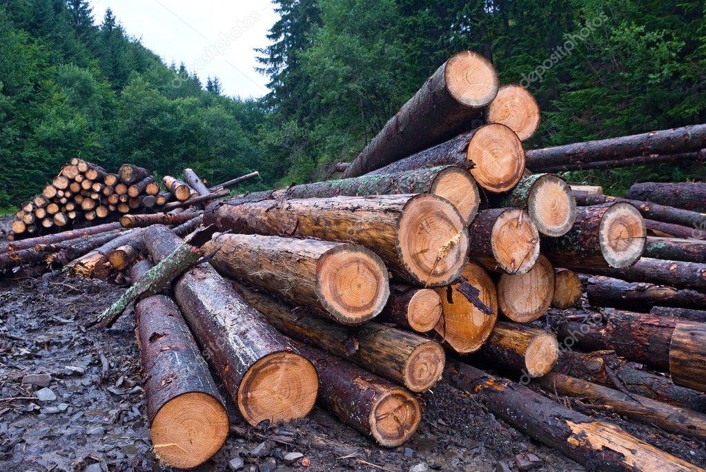 Sawed pine tree barrels