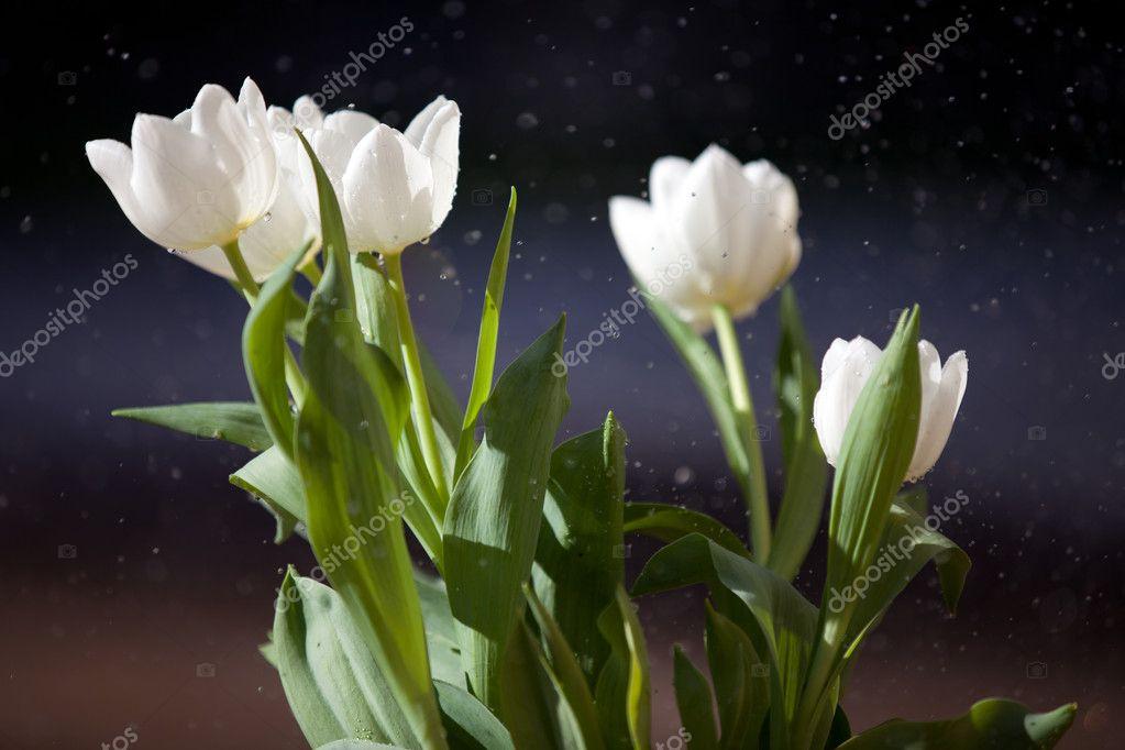 April Duschen Bringen Mai Blumen Stockfoto C Deborahkolb 8969658
