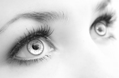 Beautiful female eyes, very close, black-and-white. Expressive sight stock vector