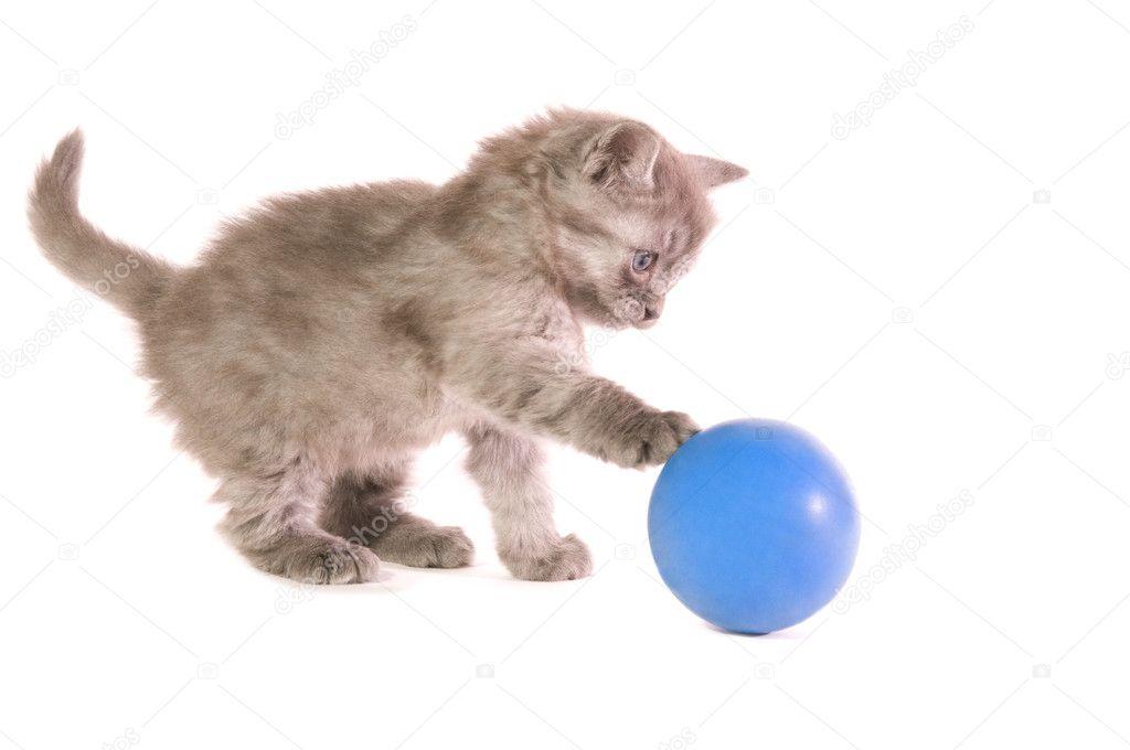 картинки котенок с мячиком опубликовал фото многолетней