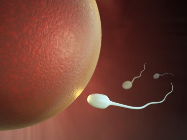 3D medical illustration - Sperm and egg image