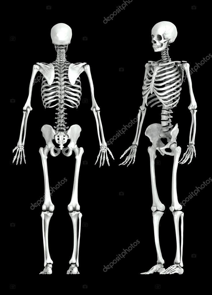 Menschliches Skelett medizinische 3D-Illustration — Stockfoto ...