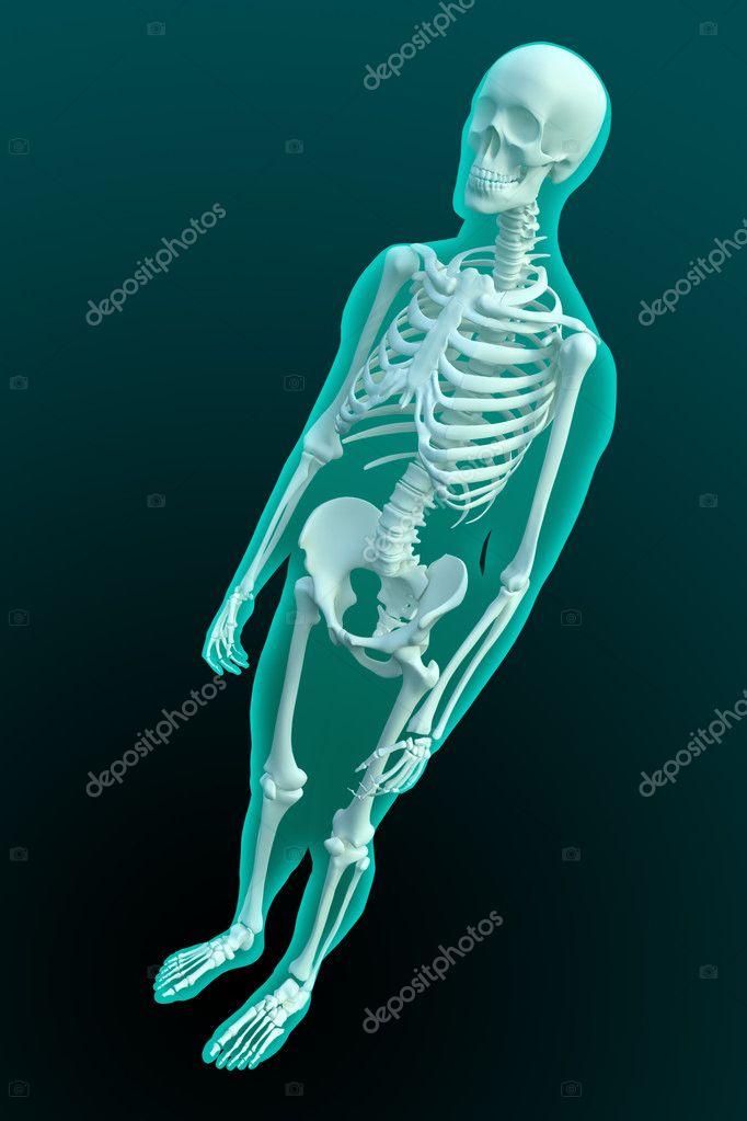 3D Rendering einer männlichen Figur mit sichtbaren Skelett-Struktur ...