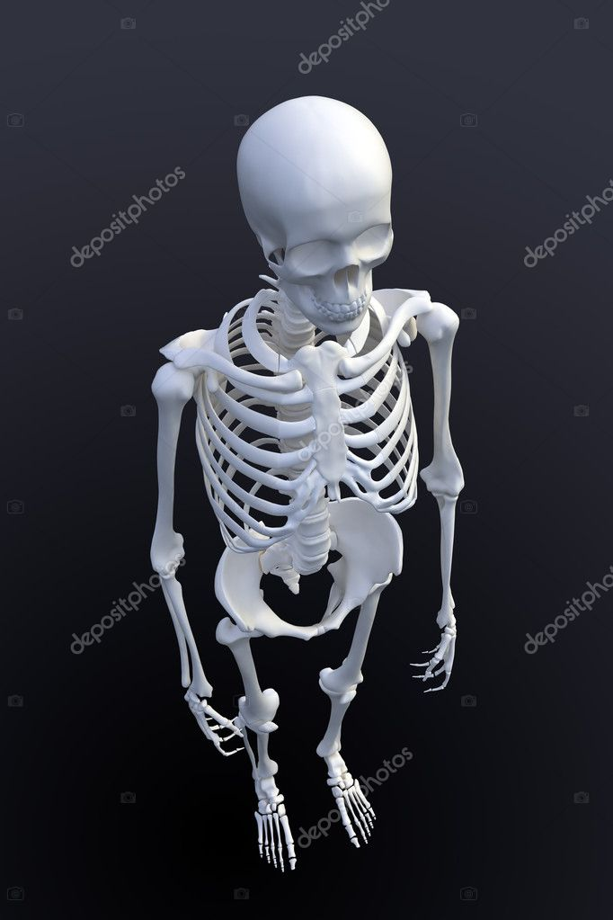 3d Rendering Of A Human Skeleton View From Above Stock Photo