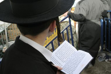 Young Lag Ba'omer pilgrim with payot reading the Torah during the fest