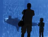 otec a dcera sledovat orca přes sklo